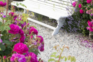 benk lavendel roser raw 3914 kopi 3