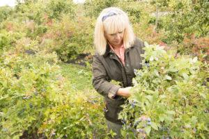 Jon og Unni Ramsvatn har både pærer og blåbær i hagen.