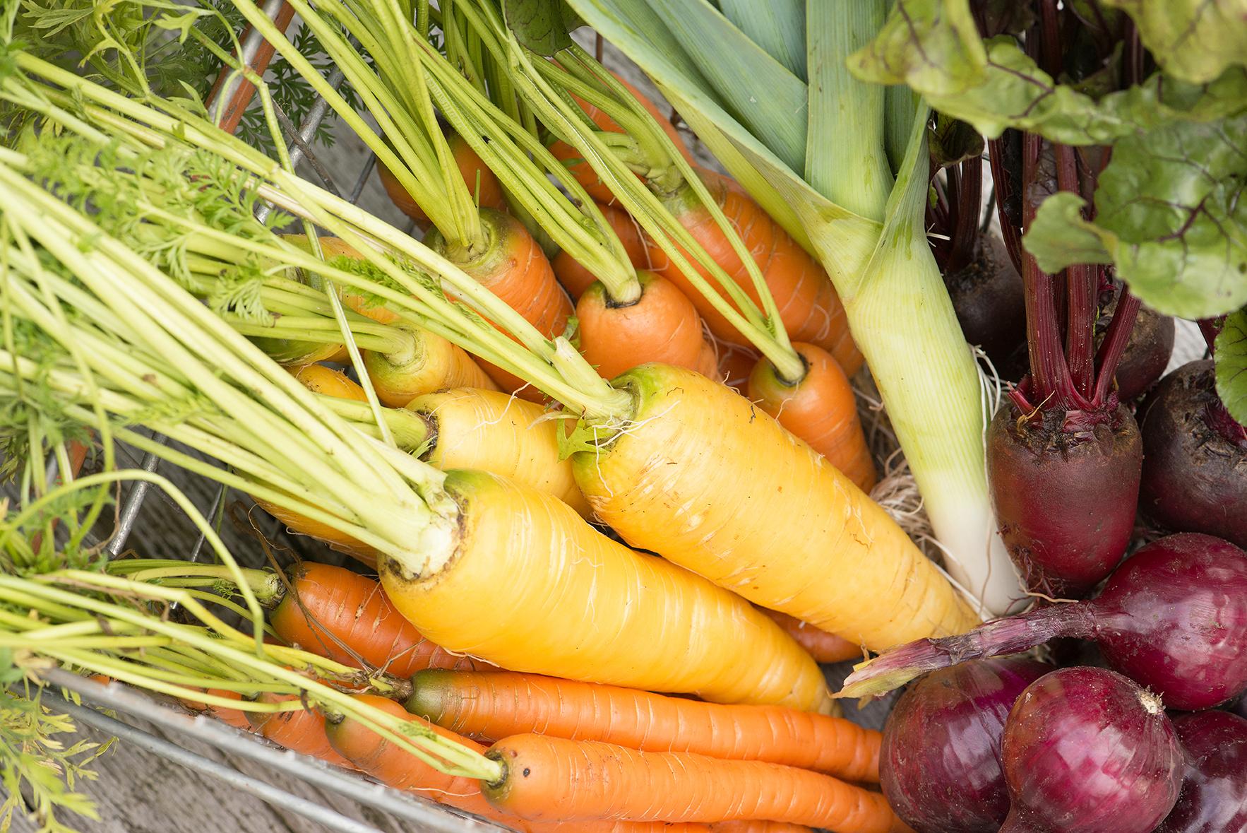 Økologiske gulrøtter.
