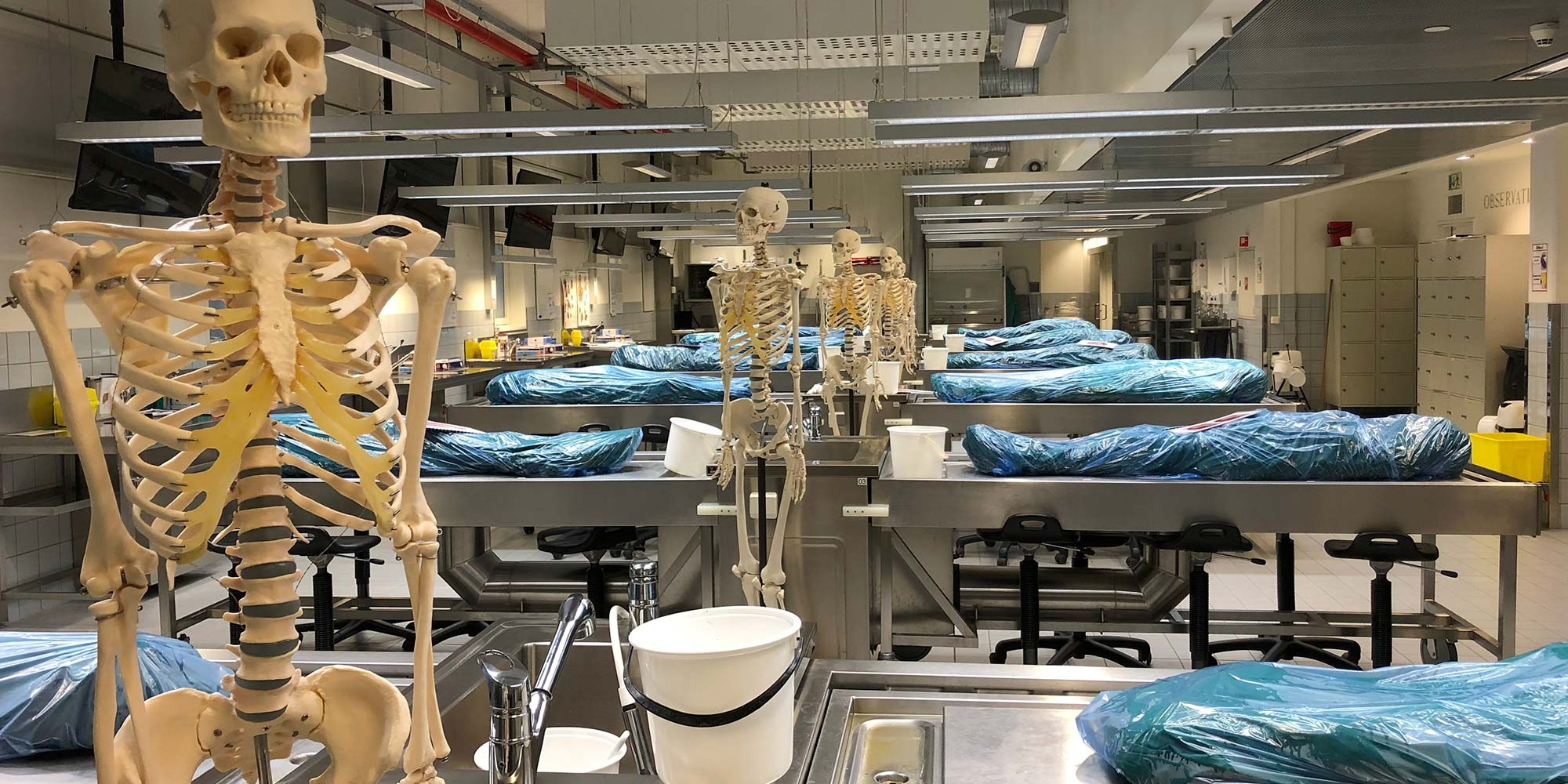 anatomisk1_toppbilde